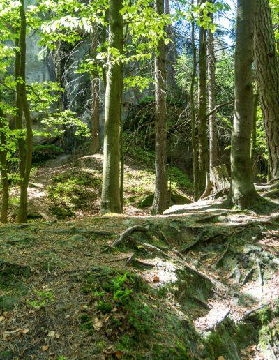 Riesengebirge - 77